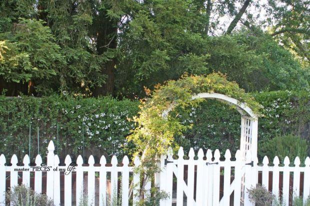 Veggie garden9