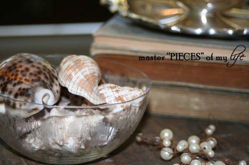 Seashells 5