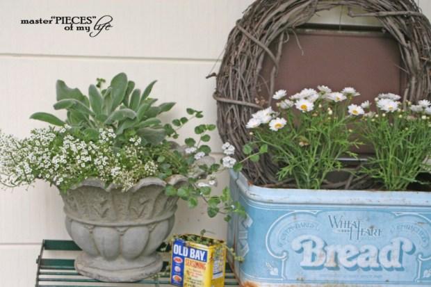 Container gardening 2020 7
