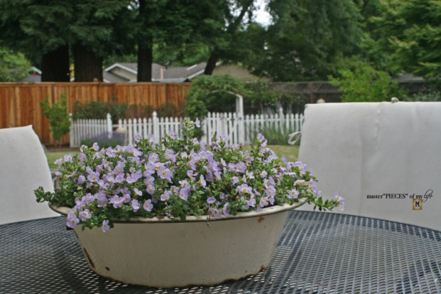 Container gardening ideas & inspo4