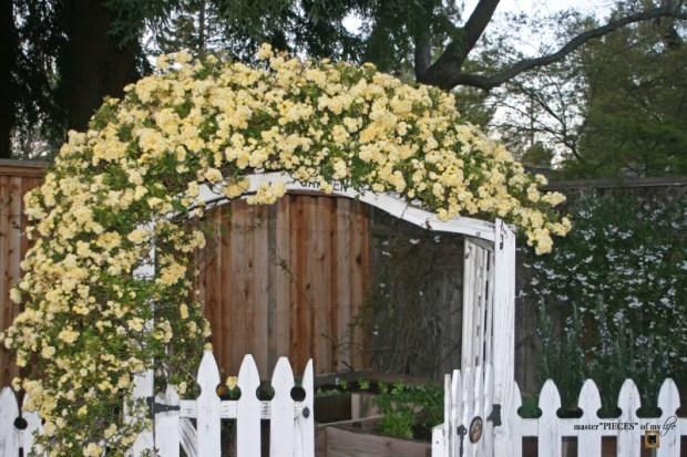 7 happenings spring garden1