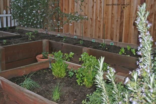 7 happenings spring garden3