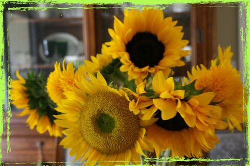 Sunflowers grunge