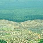 Cada año se pierden siete millones de hectáreas de bosque tropical