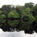 La Amazonia atesora más de 11.600 especies de árboles