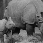 Reserva de rinocerontes para salvarlos