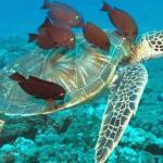 Costa Rica ya cuenta con Estrategia Nacional de Biodiversidad