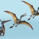 Hallan una nueva especie de reptil volador en la Patagonia