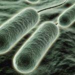 Las bacterias en tu estómago pueden afectar tu corazón.