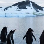 El Centro Antártico Internacional comienza a construirse