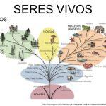 REINO DE LOS SERES VIVOS: MONERAS, PROTOCTISTAS, FUNGI, METAFITAS Y METAZOOS
