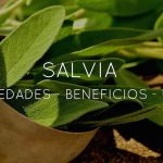 Propiedades, usos y beneficios de la salvia