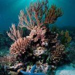 Los arrecifes de coral tiene los días contados