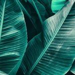 Carrera científica hacia el desarrollo de la primera hoja artificial comercialmente viable