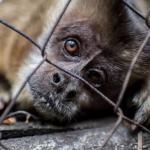 Instituto Jane Goodall lanza la campaña «Forever Wild»