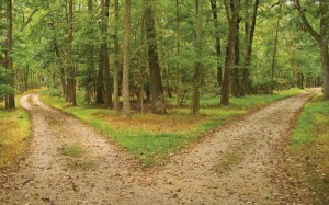 Two Roads Diverge in the Woods…