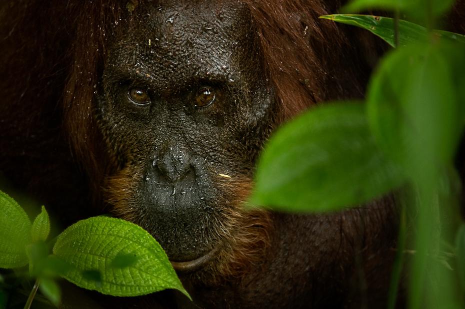 Borneo, Kalyan Varma