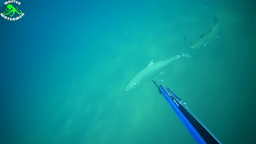 Four Snoek quick Stix. Spearfishing Bluff South Africa