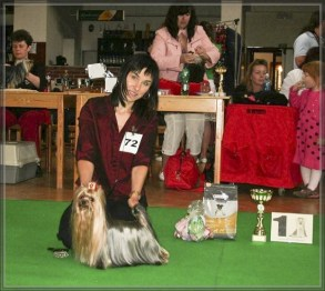Suar Baby Bohemia Platina Specjalna (klubowa) Wystawa Yorkshire Terrierów -Żeliv Czechy