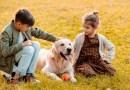 ძაღლების სიყვარული აუცილებელია