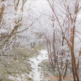 国見山 樹氷