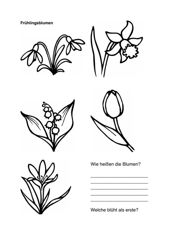 Therapiematerial Zum Thema Blumen Therapiematerial
