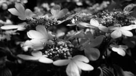 Flowers or butterflies?
