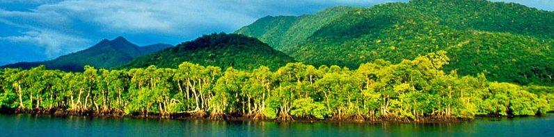 Mangroveskogen i Brasil. Idyllen!