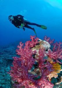 Diving at Matava, Kadavu, Fiji