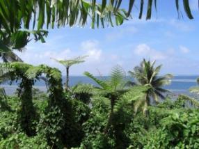 Flora Palms