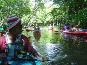 Kayaking in the mangroves
