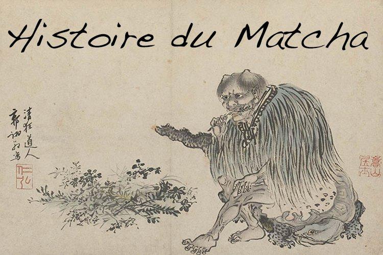 Histoire du Matcha