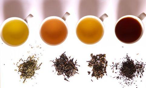 Les différentes variétés de Thé