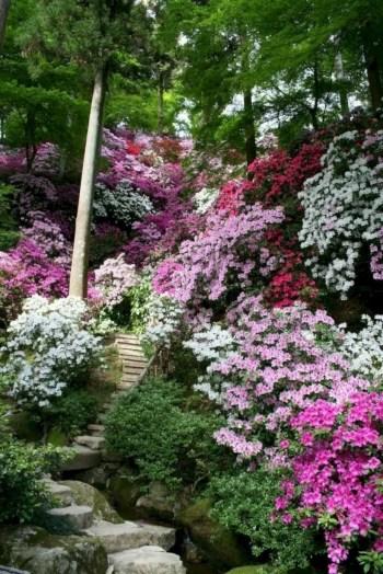 Best garden walkway to envy your visitor 46