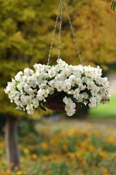Charming outdoor hanging planters ideas to brighten your yard 10