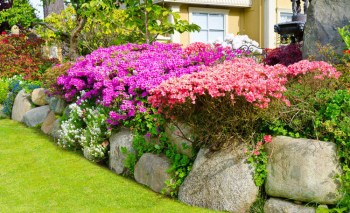 Use-rocks-as-rustic-lawn-edges-paired-with-colorful-garden-flowers