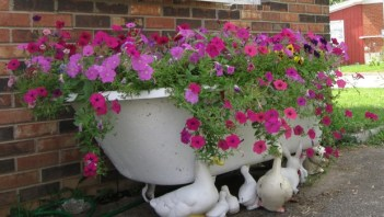 Upcycled-garden-art-cast-iron-bathtub-pink-purple-petunias