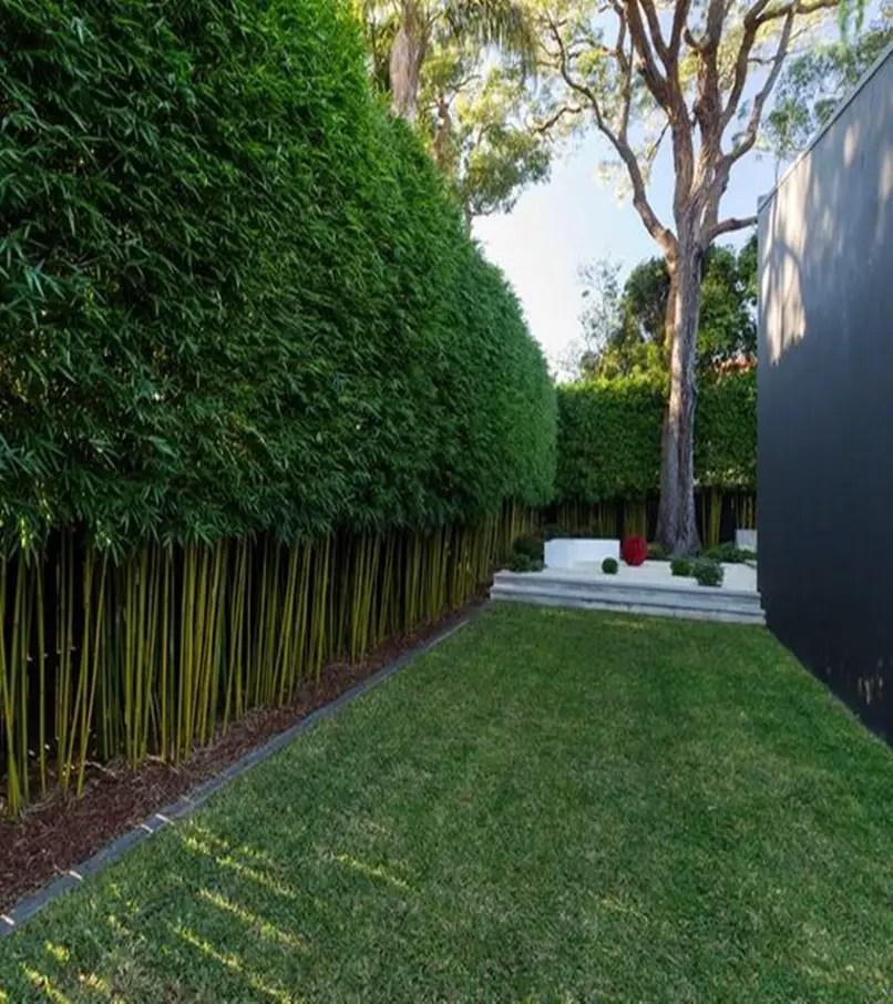 Front garden hedge plants 1