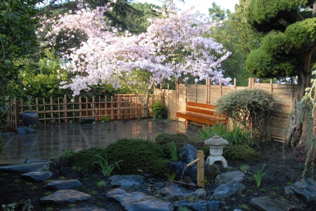 Japanese garden with blooming trees