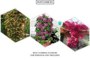 12 Best Climbing Flowers for Pergolas and Trellises