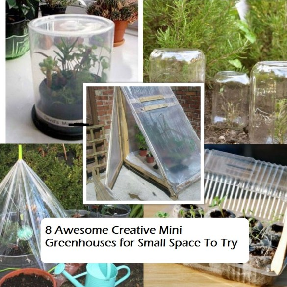 8 awesome creative mini greenhouses for small space to try(1)
