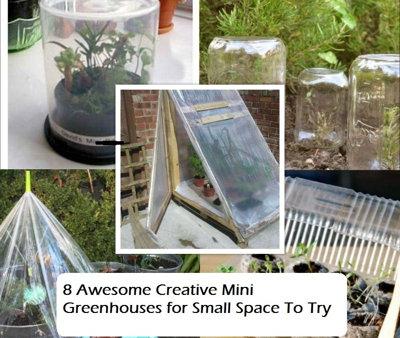 8 Awesome Creative Mini Greenhouses for Small Space To Try