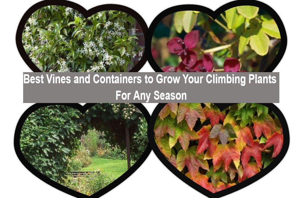 Best vines and containers to grow your climbing plants