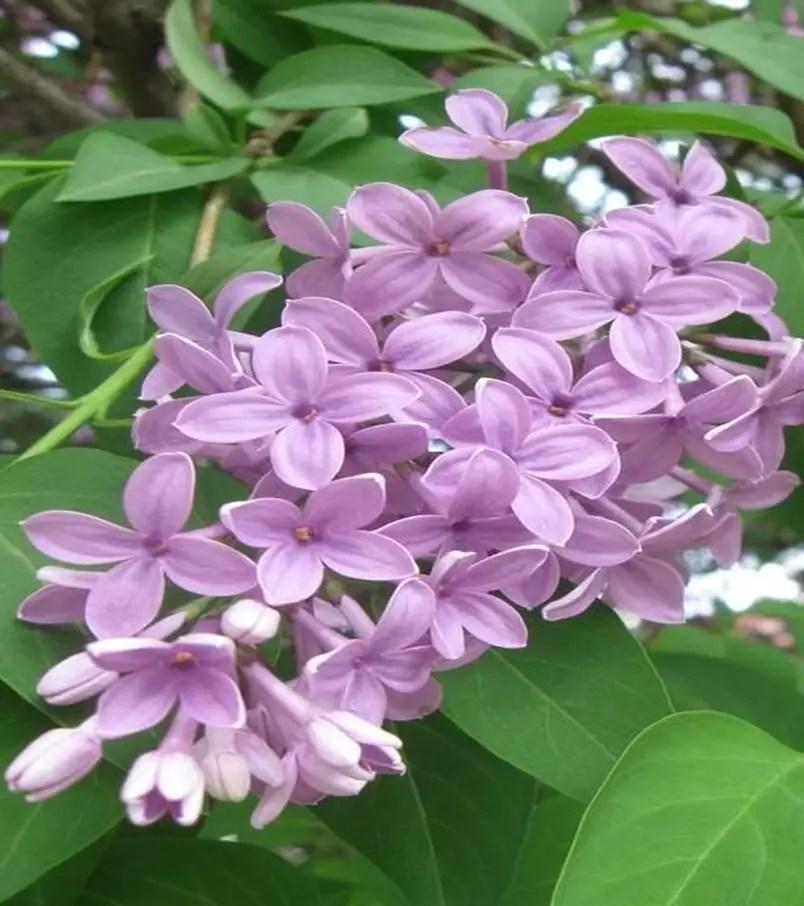 Fragrant flower 5