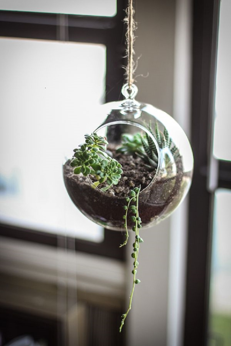 Hanging glass terrarium planter