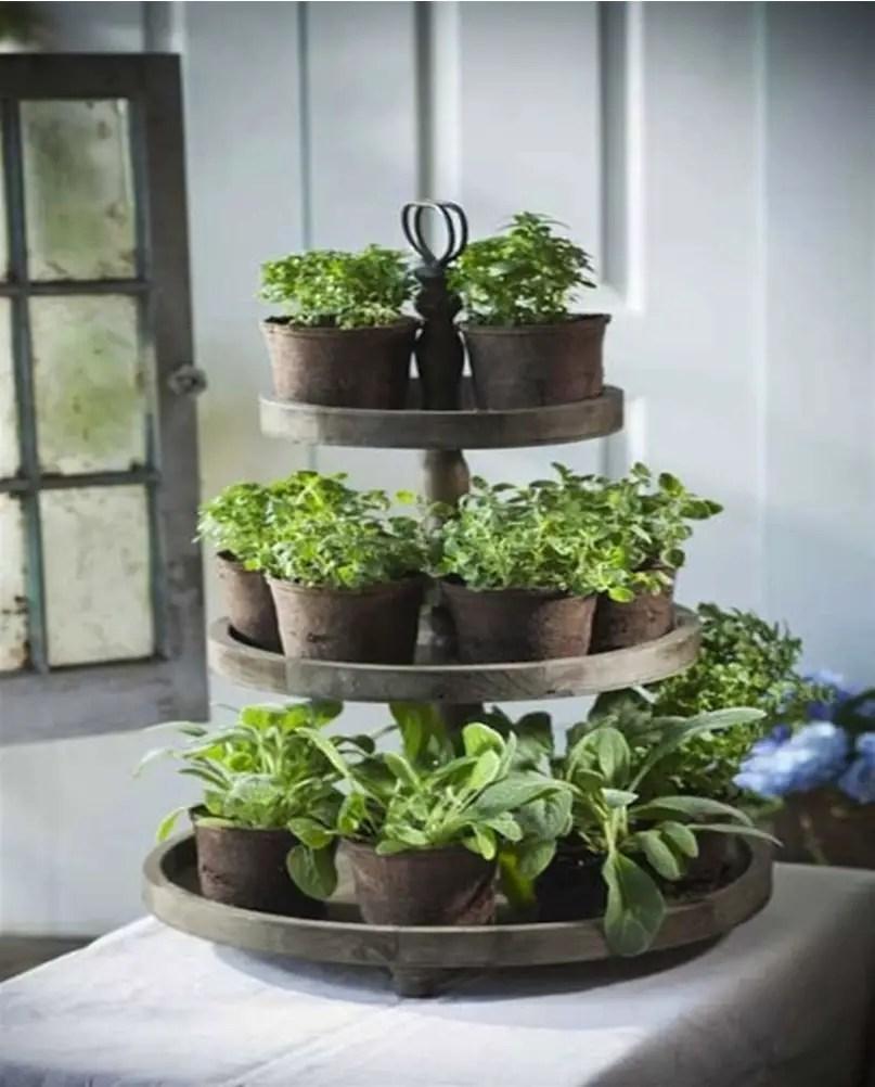 Kitchen herbs garden 8