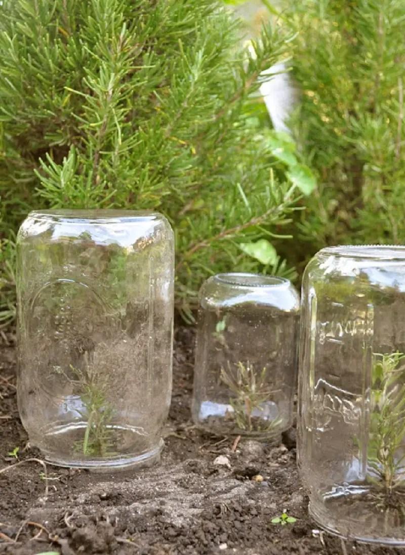 Mason-jar-greenhouse