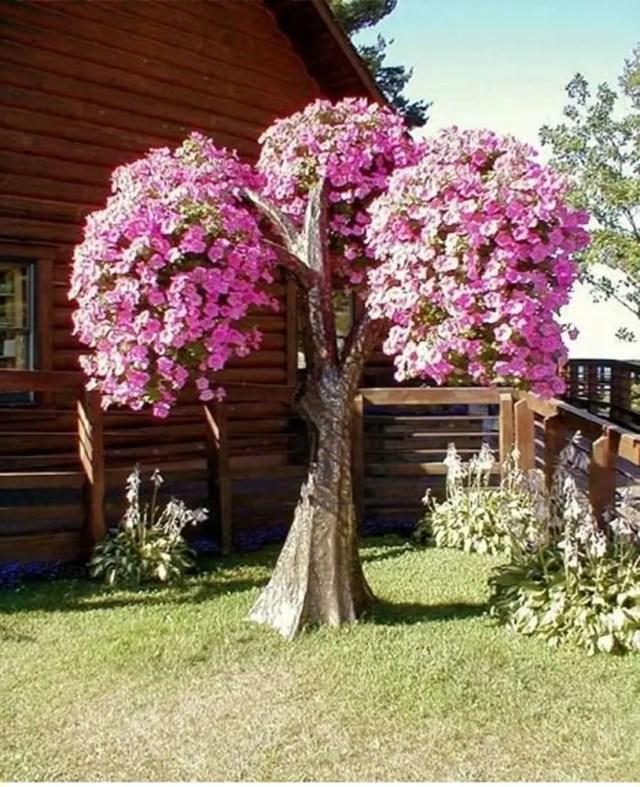 Petunia garden 11