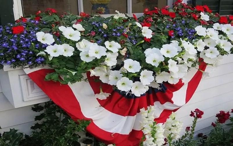 Petunia garden 12