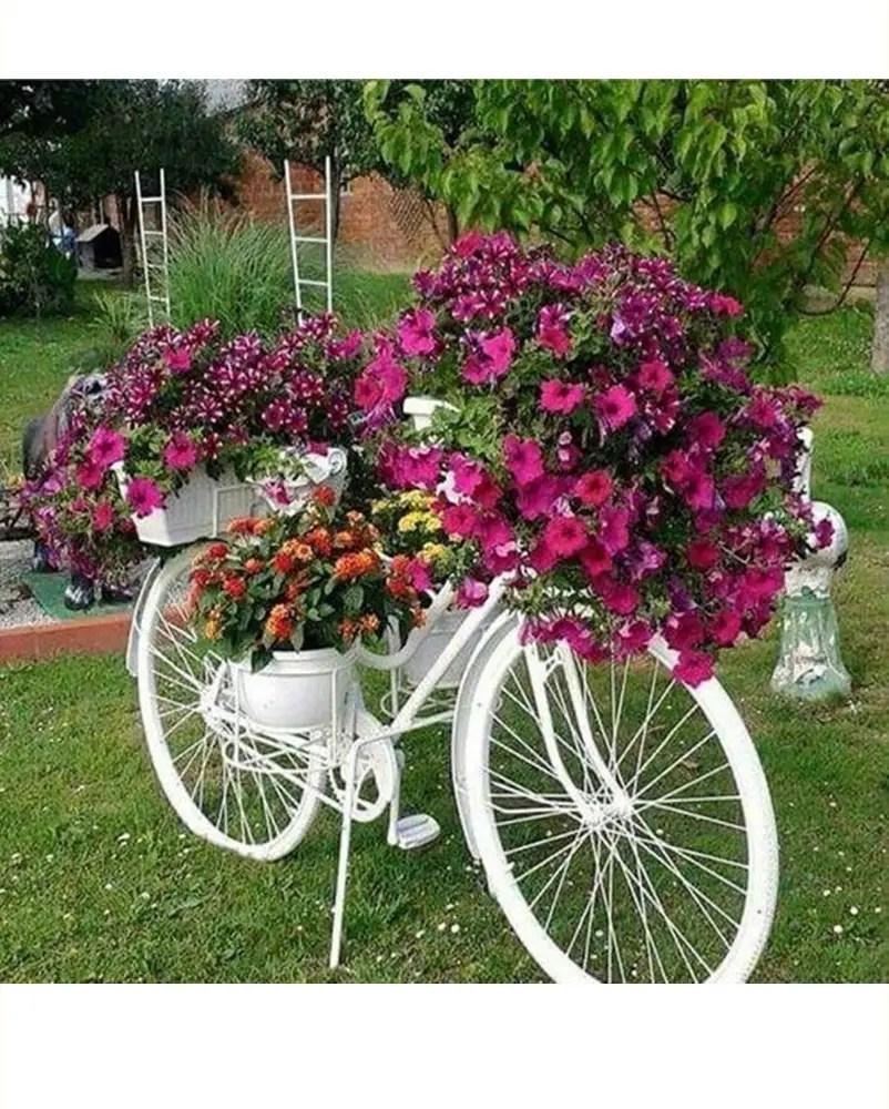 Petunia garden 2